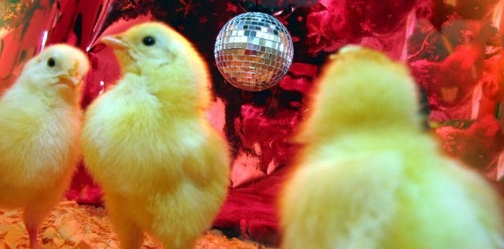3 chicks dancing with a disco ball hanging from the ceiling