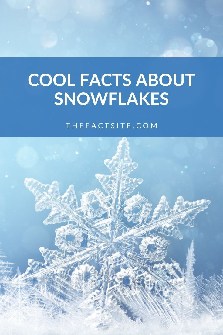 Cool Facts About Snowflakes