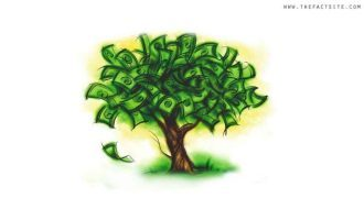Money Tree - Wealth Statistics