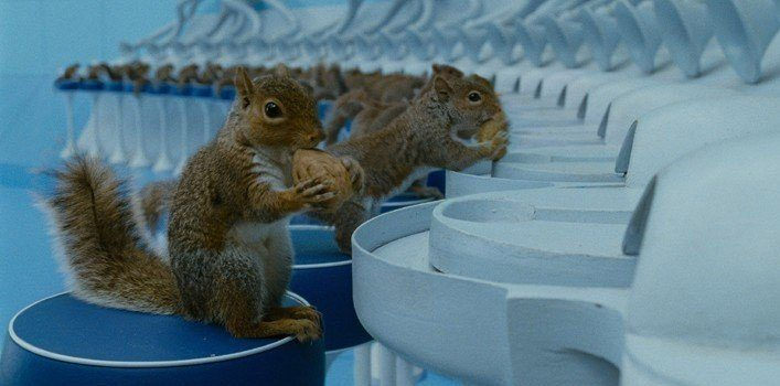 Charlie and the Chocolate Factory Squirrels