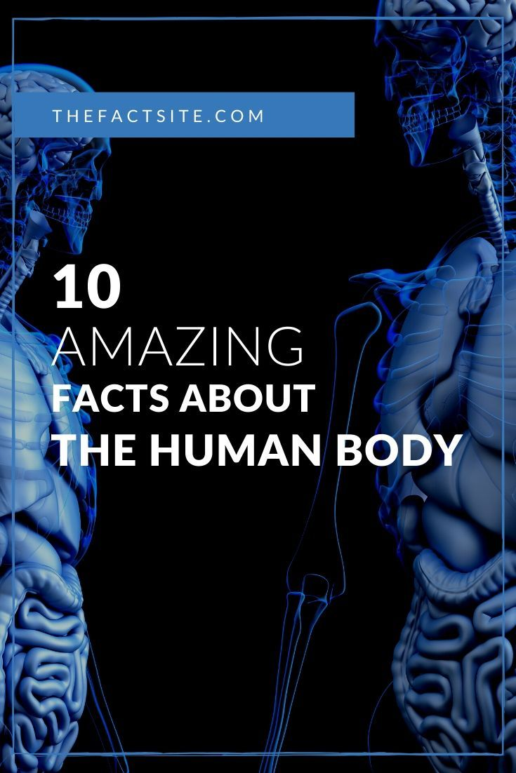 10 Amazing Facts About the Human Body