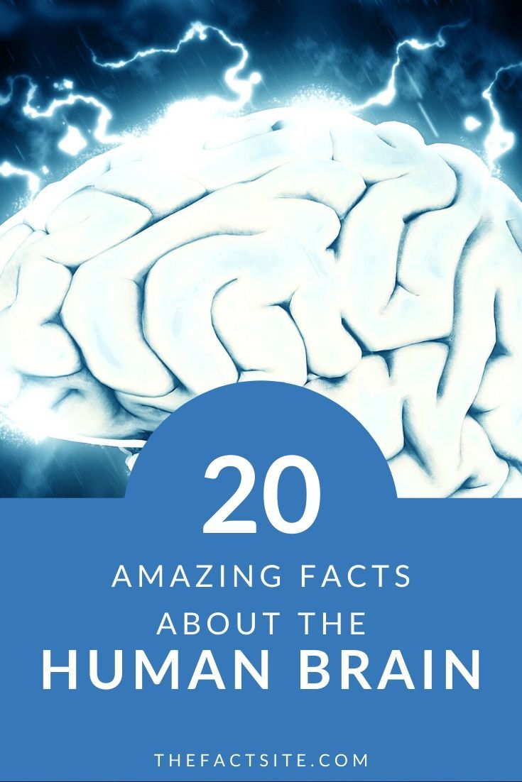 20 Amazing Facts About The Human Brain