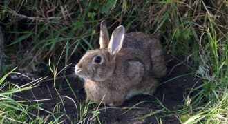 Facts About Rabbits