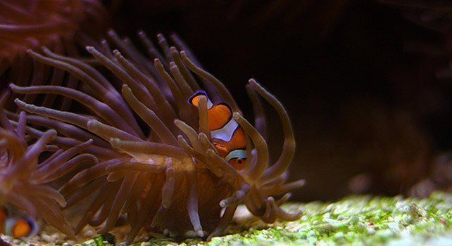 Facts About Clownfish