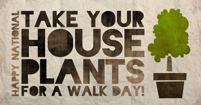 Take Your Houseplants for a Walk Day