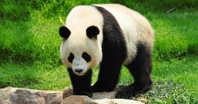 home design store dallas with Giant Panda Facts on Target Logo furthermore Dna Sent To The Cloud besides Chicago Bulls Unveil New Court Design further Mary Padian 31192 likewise Giant Panda Facts.