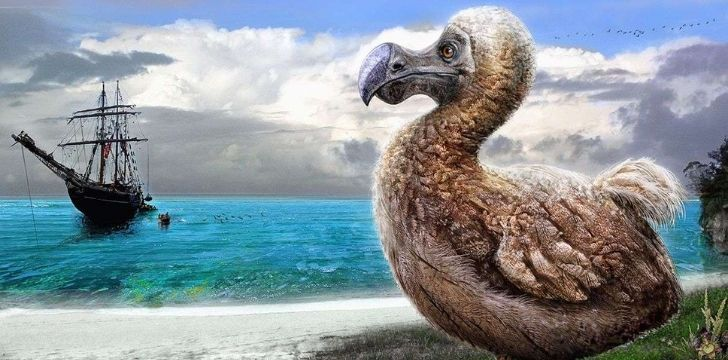 A dodo sitting on the beach looking over to a ship on the sea