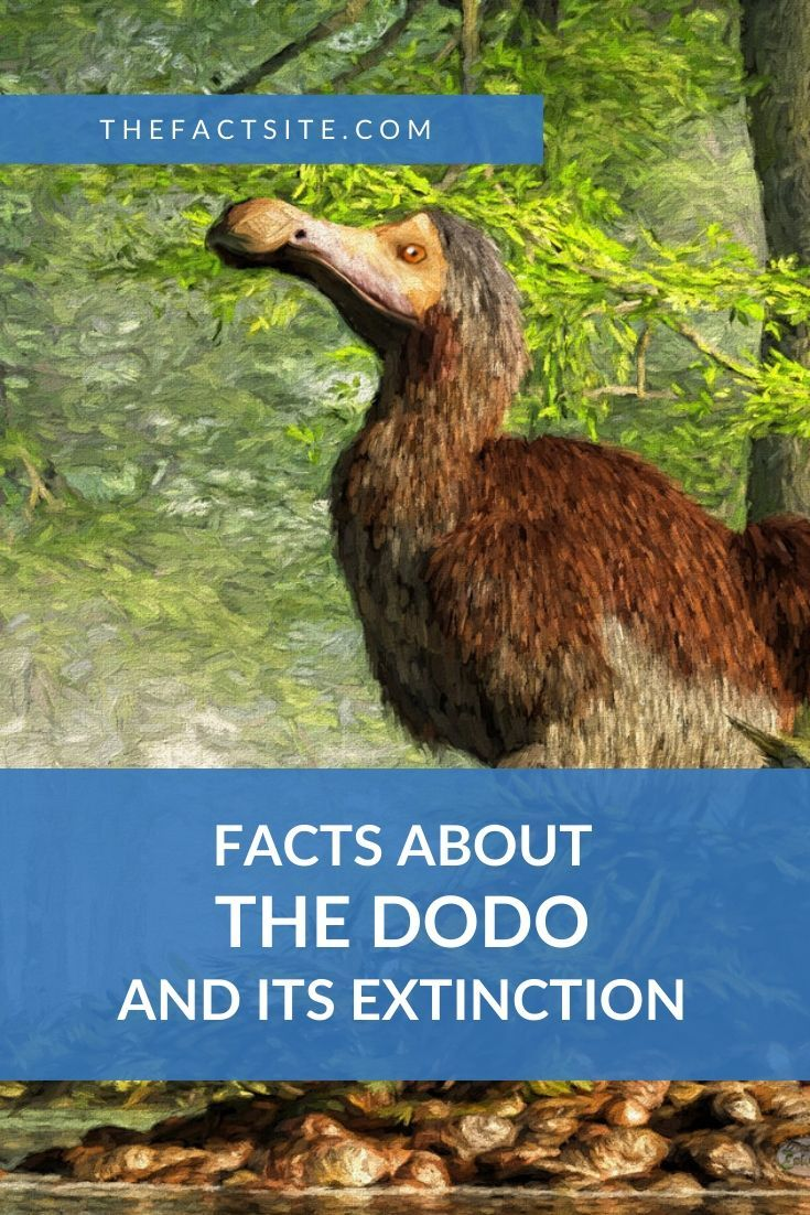 Facts About The Dodo and Its Extinction