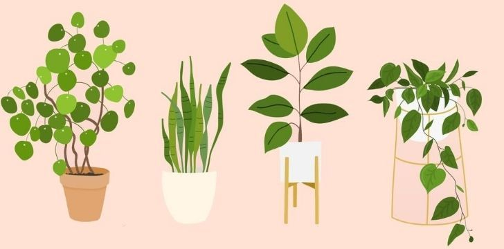 Four common house plants