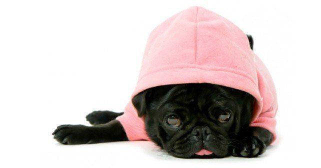 Cute Dog Hoodie