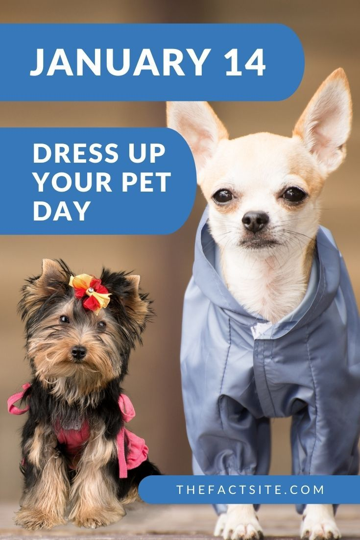 Dress Up Your Pet Day | January 14