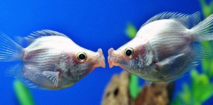 30 true facts about tropical fish the fact site for Interesting facts about fish
