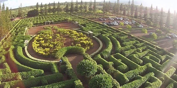The Dole Plantation has the largest pineapple maze in the world.