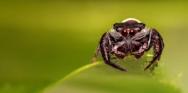 A spider sitting on a leaf.
