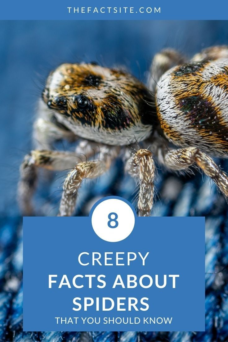 8 Creepy Facts About Spiders