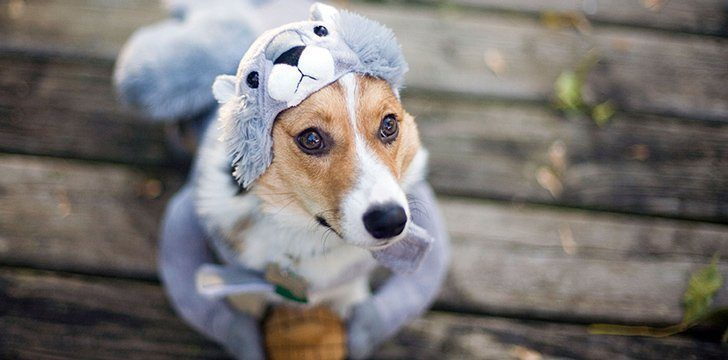 14th January - Dress Up Your Pet Day.