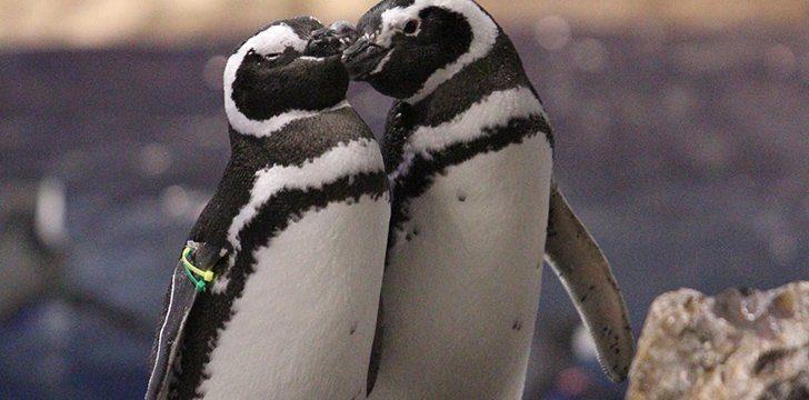 20th January - Penguin Awareness Day.