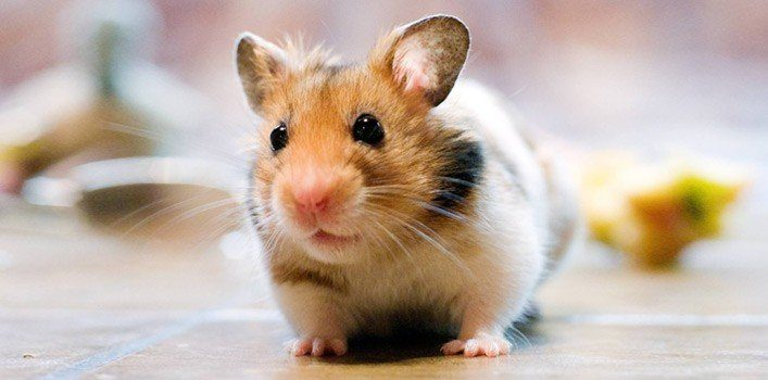 19 Cute Facts About Hamsters