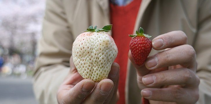 Strawberries are not always red.