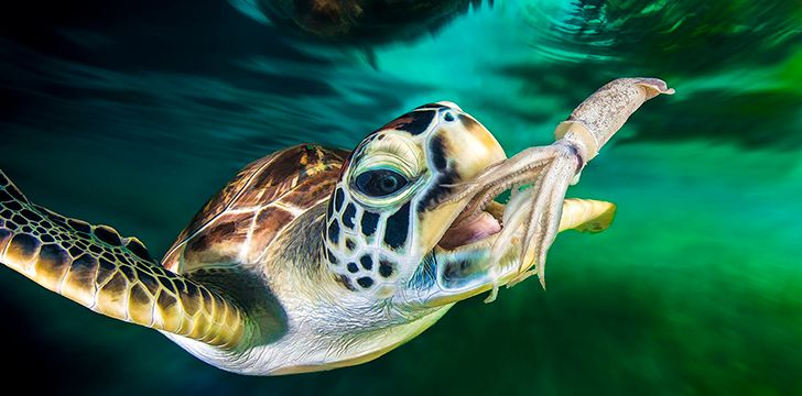 23rd May – Turtle Day.