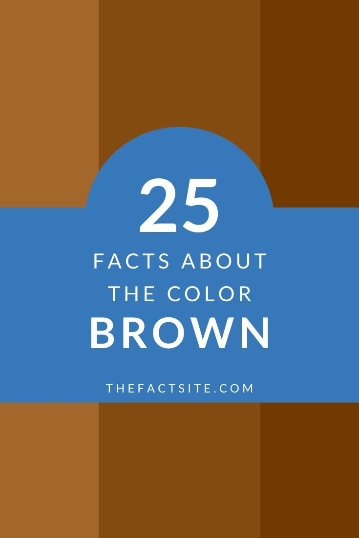 25 Facts About the Color Brown
