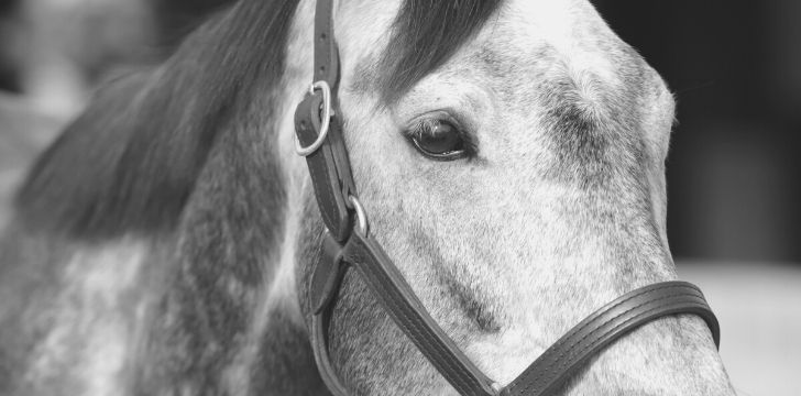 A horse in grayscale