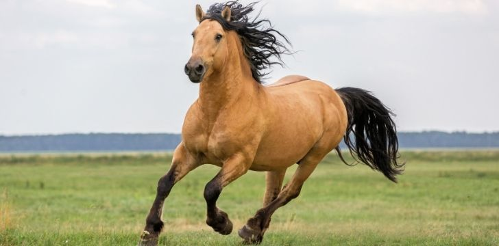 A brown horse running