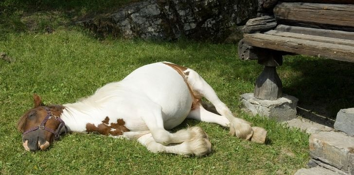 A horse flat asleep on the grass