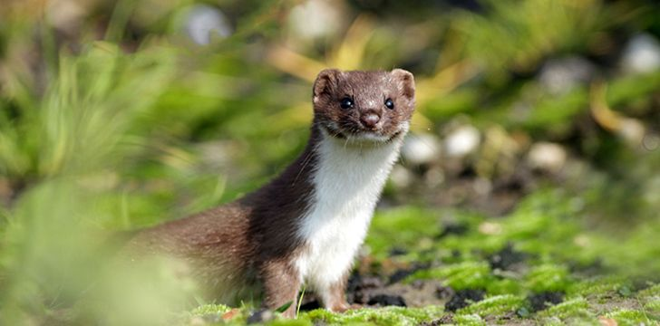 14th June – Pop Goes The Weasel Day.