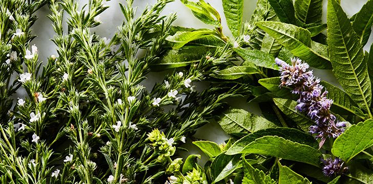 August 29th – More Herbs, Less Salt Day.