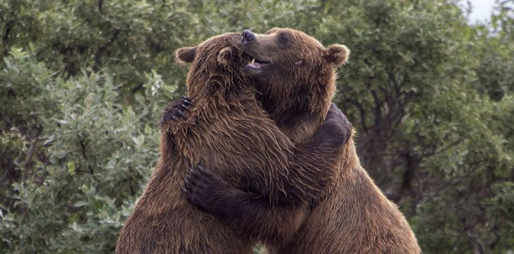 7th November - Hug A Bear Day.