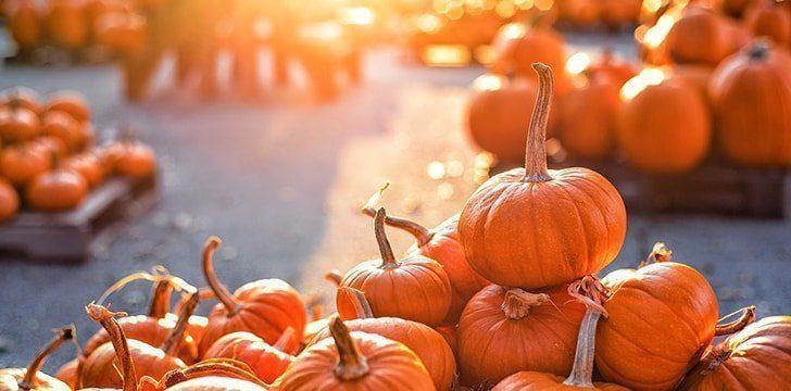 26th October – Pumpkin Day.