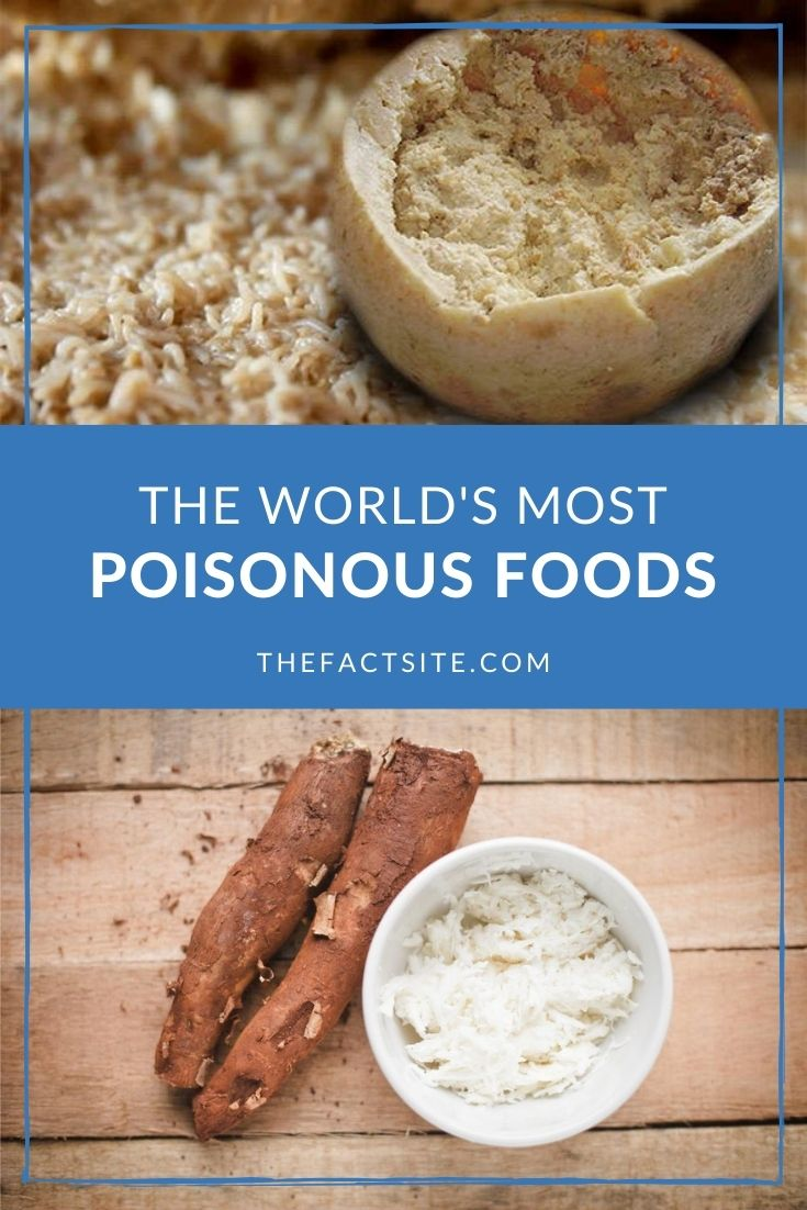 The World's 5 Most Poisonous Foods