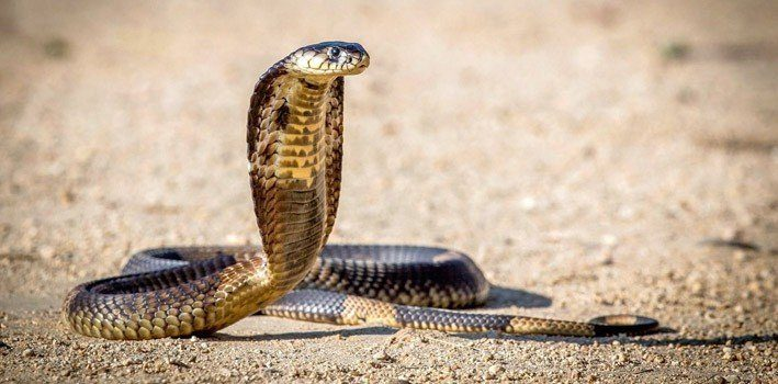 Facts About Snakes that will Rattle Your Mind