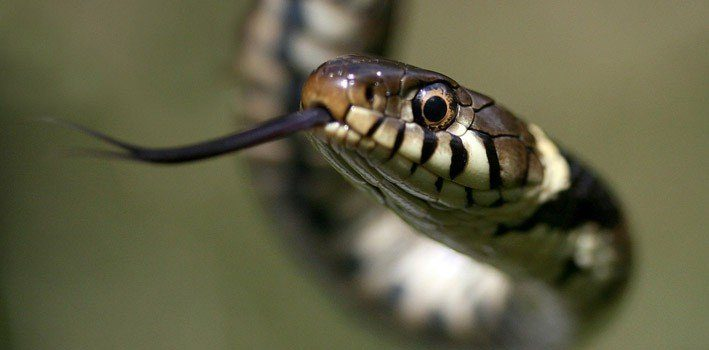 30 Facts About Snakes
