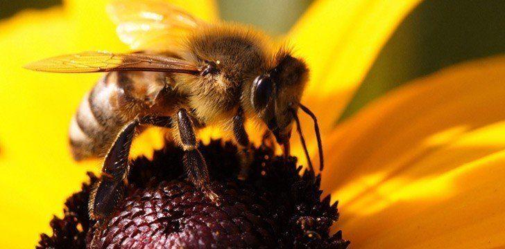 Bees Get Drunk