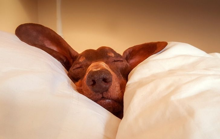 a dog sleeping in a bed