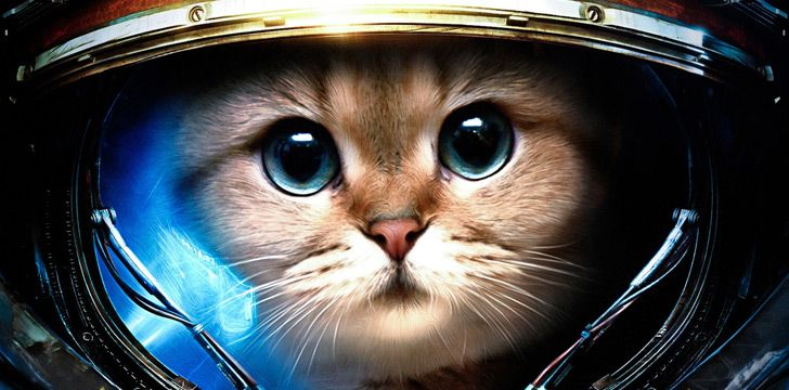 The movement of falling cats is used as part of an astronaut's training.