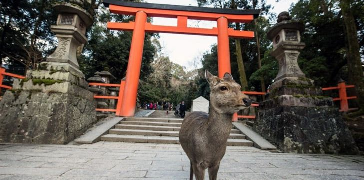 Japan has a roaming deer infestation.