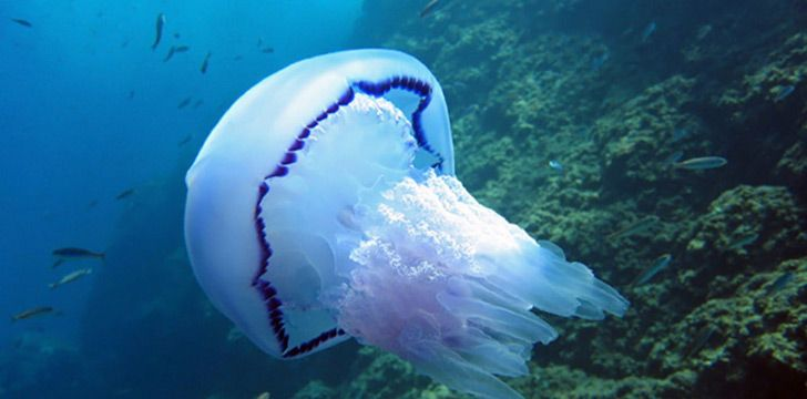 Jellyfish are 95% water.