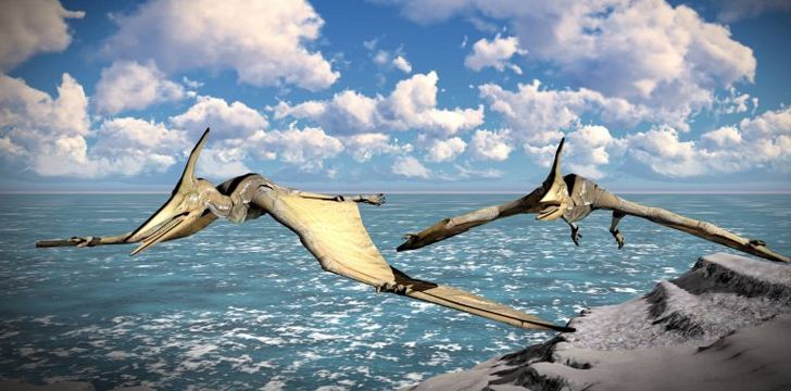 There was a type of Pterodactyl with a bigger wingspan than a fighter jet.