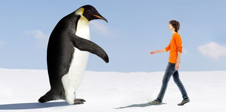 40 million years ago penguins were 6 feet tall.