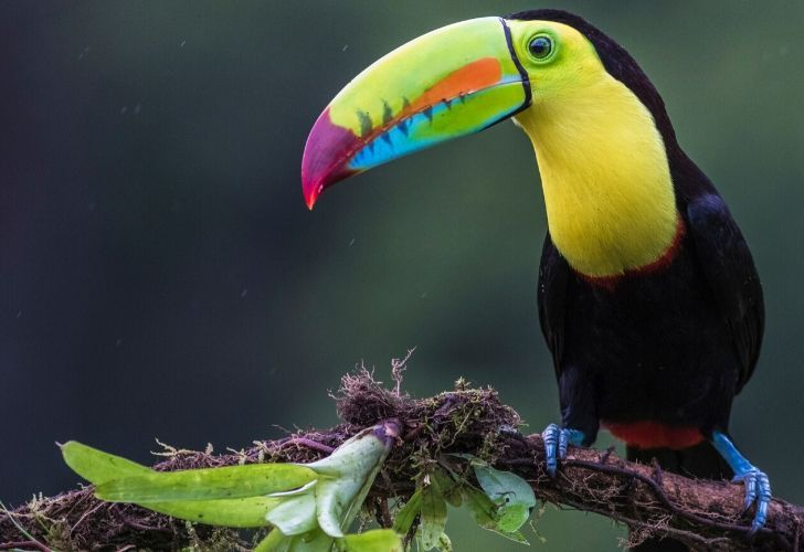 A toucan standing on a tree branch.