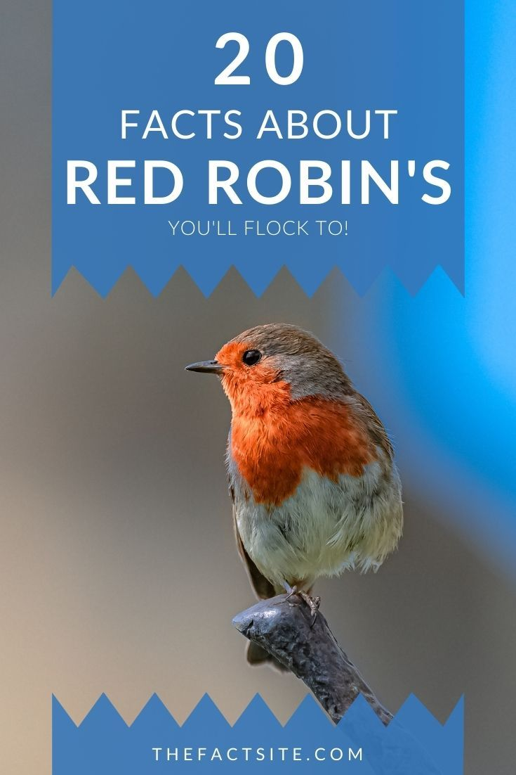 20 Facts About Red Robin's You'll Flock To!