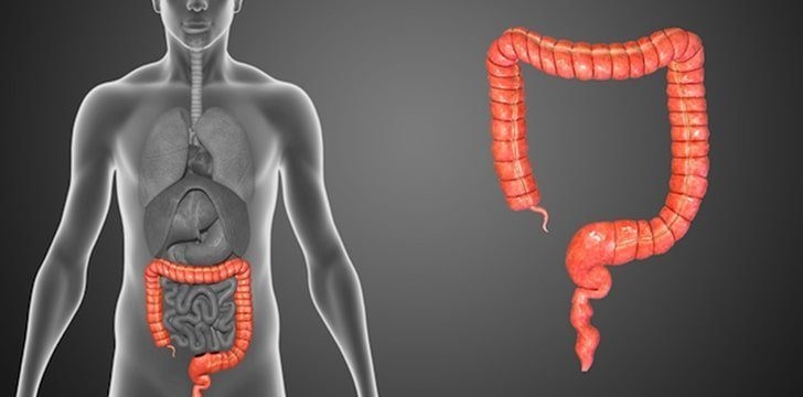 What is the purpose of the appendix?