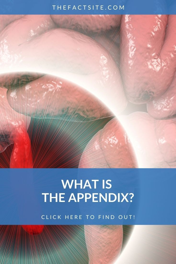 What Is The Appendix?