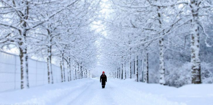 Snowy path with white tress surrounding it, and a man walking down the middle