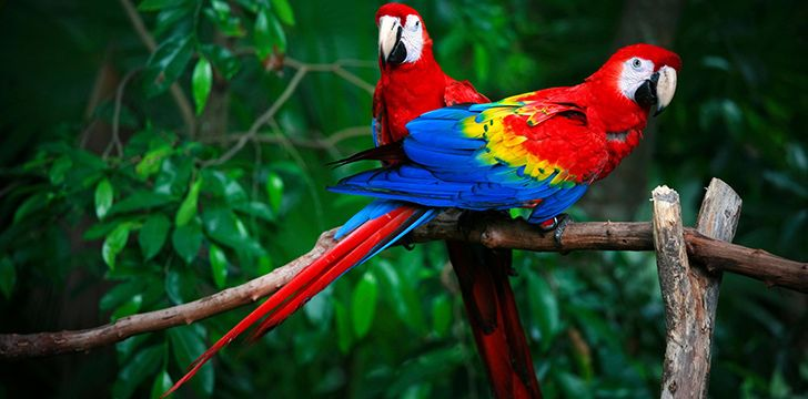 Colorful Facts About Parrots