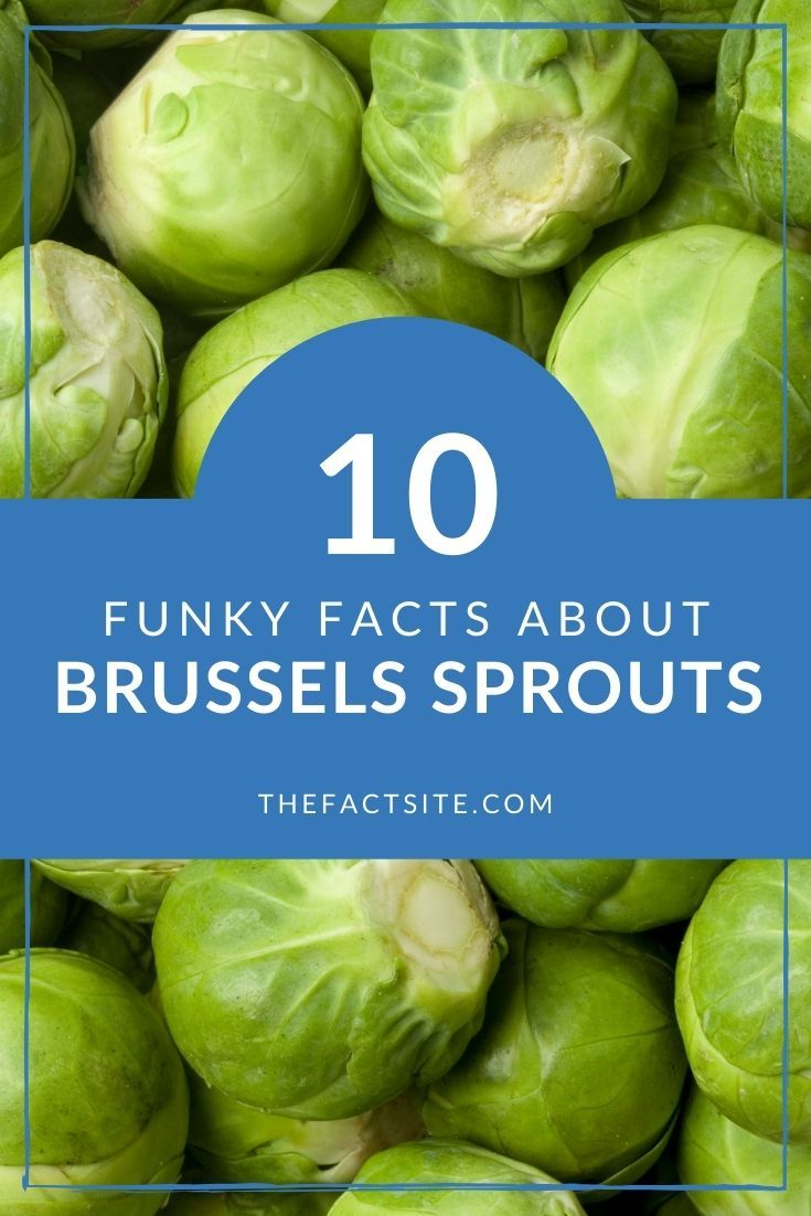 10 Funky Facts About Brussels Sprouts