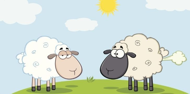 An unimpressed sheep with another sheep who just farted